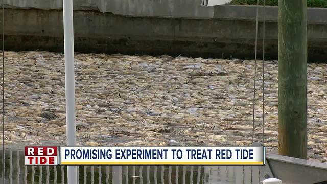 Respiratory problems in Pinellas due to red tide