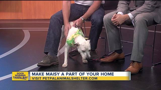 Pet of the Week Maisy