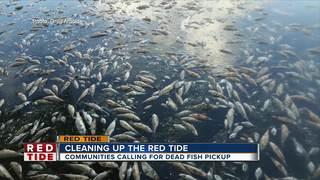 Vendor hired in Manatee Co. to remove dead fish