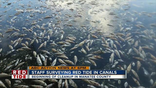 Manatee County plan for red tide clean-up