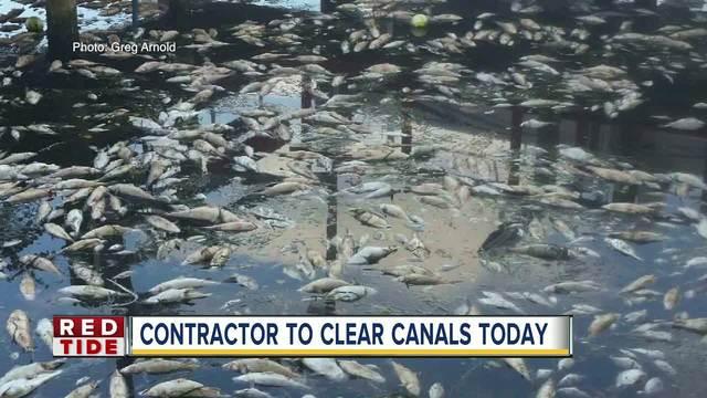 Vendor hired in Manatee Co- to remove dead fish