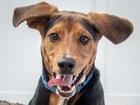 Pet of the week: Hank is an energetic boy