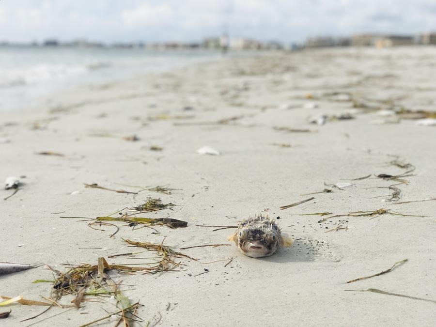Day Weather Forecast Treasure Island Florida