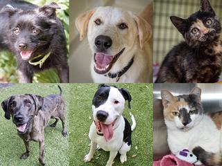 PHOTOS: 20+ adoptable pets for 9-14