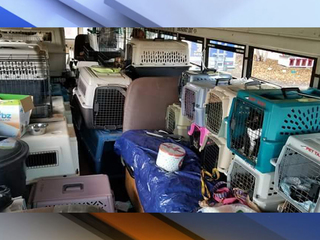 Local efforts help animals impacted by Florence