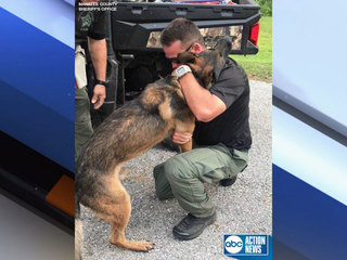 Missing Sheriff's K9 located safely