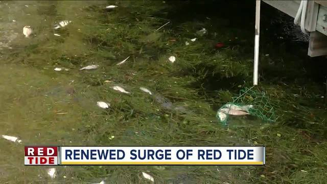 Red tide now impacting Pinellas County's intracoastal waterways and seabirds