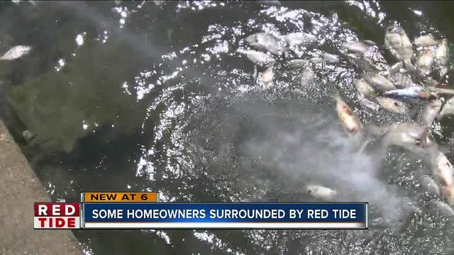 Red tide making Pinellas County residents sick