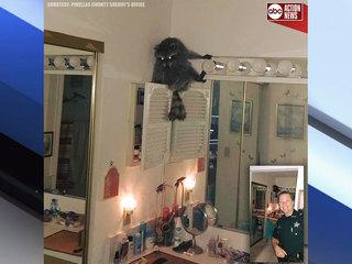 Big raccoon finds it's way onto woman's vanity