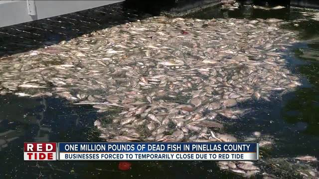 Pinellas businesses hurting- smell unbearable thanks to red tide