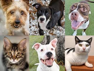 PHOTOS: 20+ adoptable pets for 9-21
