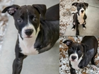 Pet of the week: Dharma is a special puppy