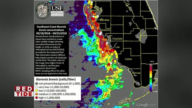High concentrations of Red Tide remain off coast of Pinellas- Manatee…