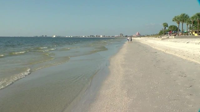Red tide lingering in south Pinellas County