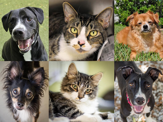 PHOTOS: 20+ adoptable pets for 10-5