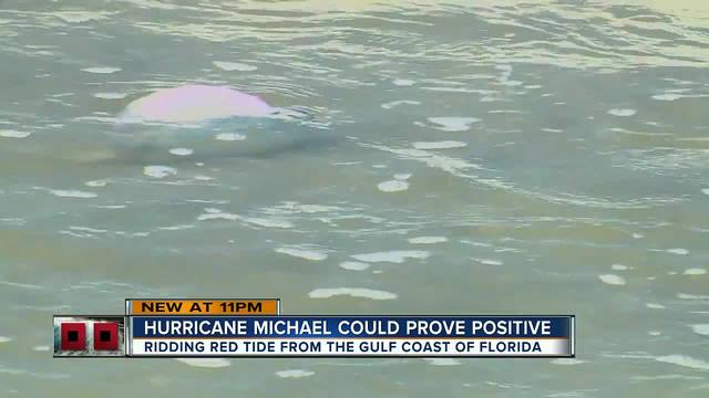 Hurricane Michael- What impacts will it have on our red tide-