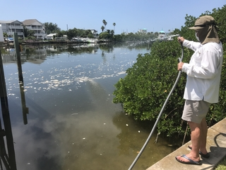 How far can red tide toxins travel by air?