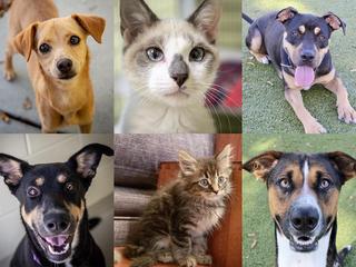 PHOTOS: 20+ adoptable pets for 10-12