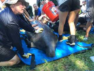 Three manatees rescued from retention pond