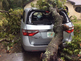 Tree falls on car with mom, 3 kids inside