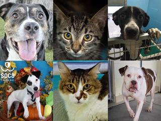 PHOTOS: 20+ adoptable pets for 11-9