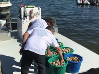 Clams released to reduce red tide toxins
