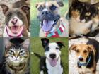 PHOTOS: 20 adoptable pets for 12-7